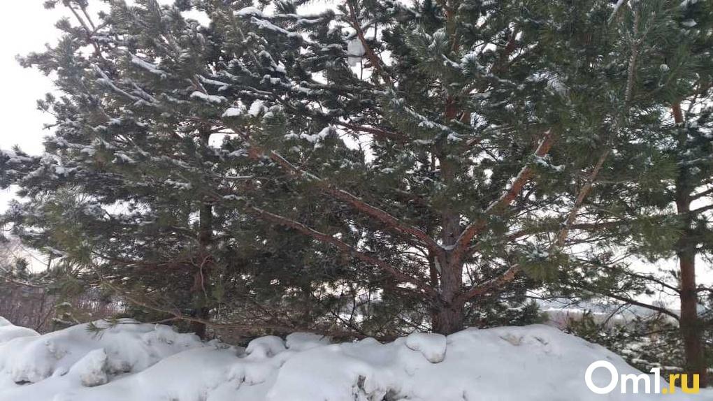 Мощный снегопад и ливень: какая погода ждёт новосибирцев в октябре?