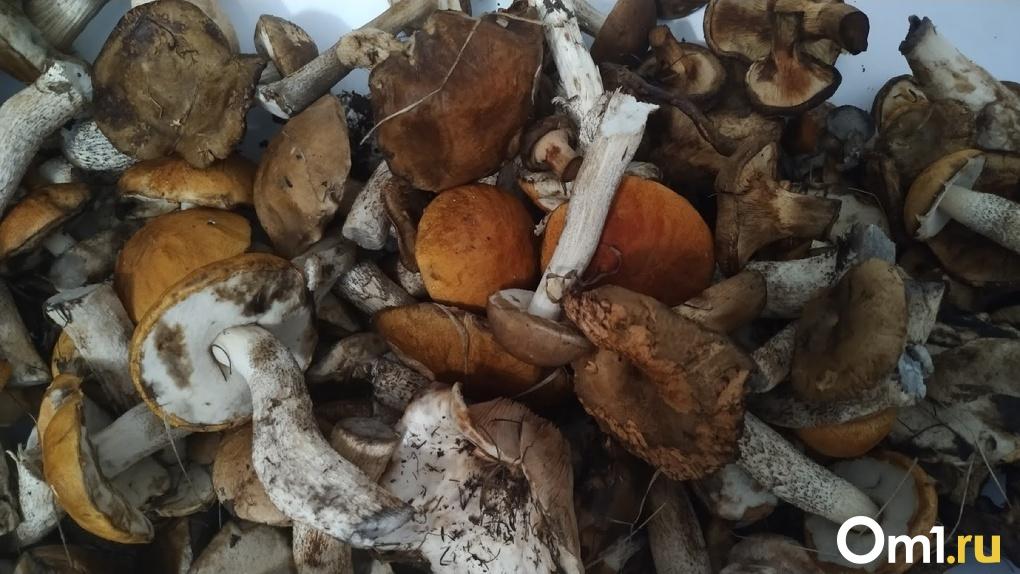 Мать и сын из Омска впали в кому, поужинав грибами