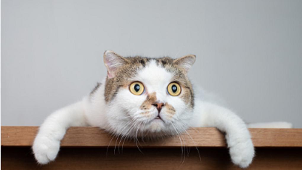 Новосибирский живодёр расстрелял кошку на глазах у ребёнка