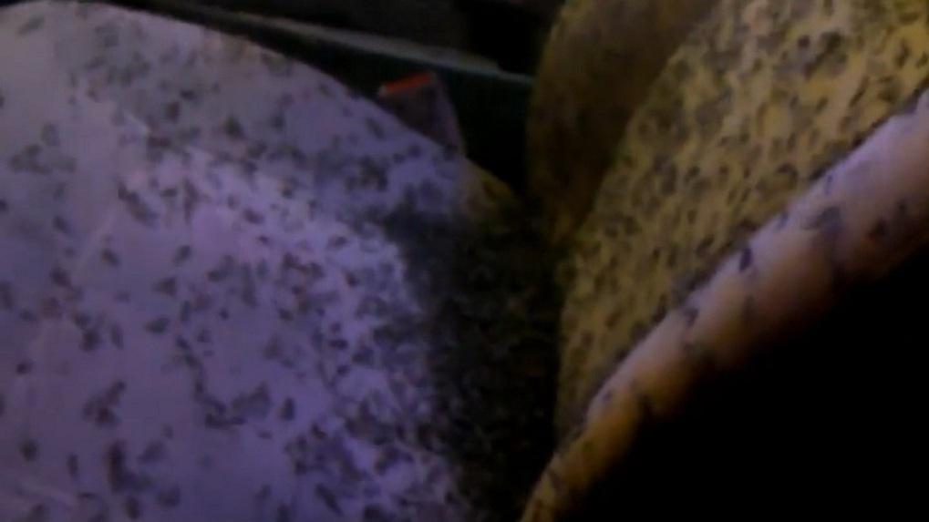 Полчища комаров захватили автомобиль рыбака из Омской области - ВИДЕО