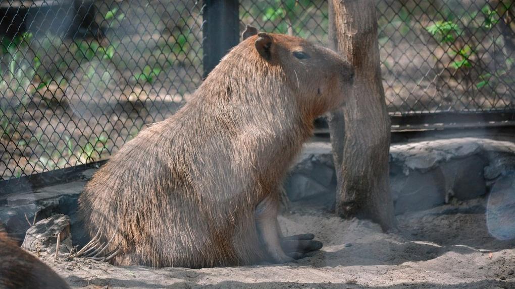 В Новосибирском зоопарке опровергли информацию о том, что учреждение откроется 1 июня