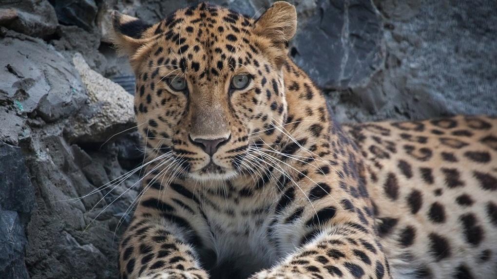 Остались считаные дни: глава Новосибирска рассказал, когда зоопарк снимут с карантина
