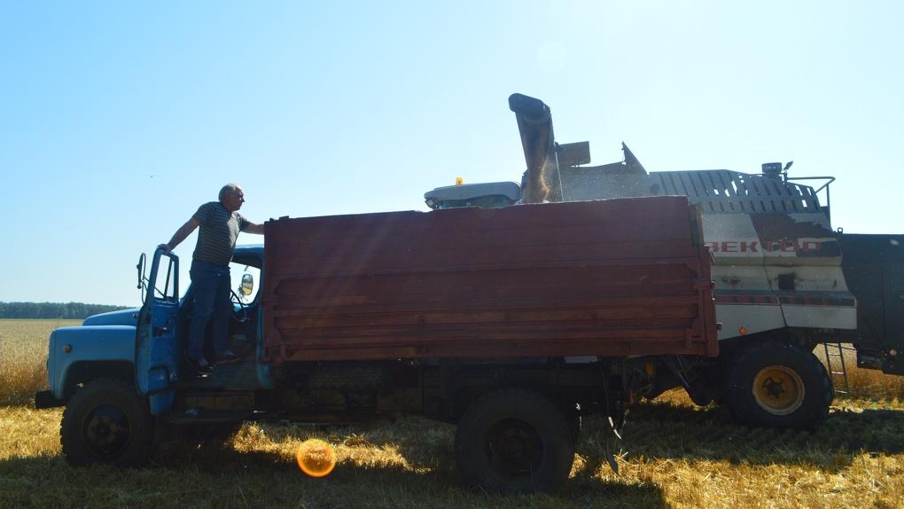 Омские аграрии за день намолотили рекордное количество зерна