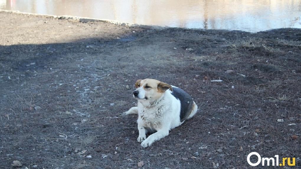 Собака с большим сердцем. Для омского приюта выбрали эмблему