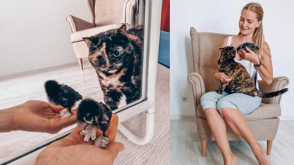 Жительница Новосибирска подружила кошку с курицей