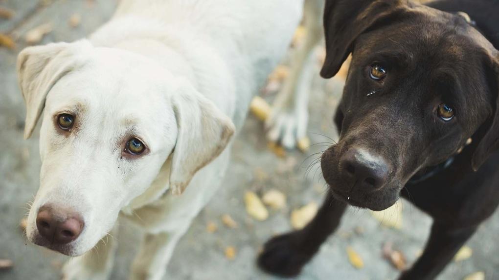 В Омске перед Новым годом начали травить собак