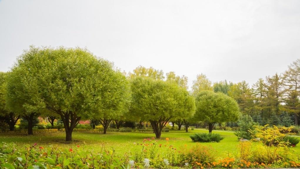 В Омском дендросаду поселился ангар-нелегал
