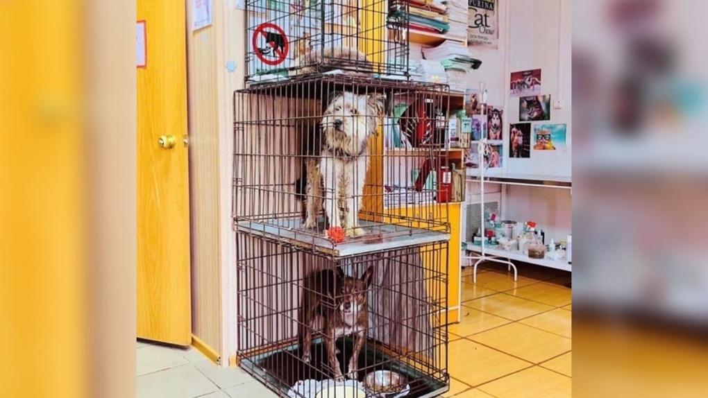 Известный омский приют для животных сообщил о нехватке кормов и медикаментов для своих обитателей