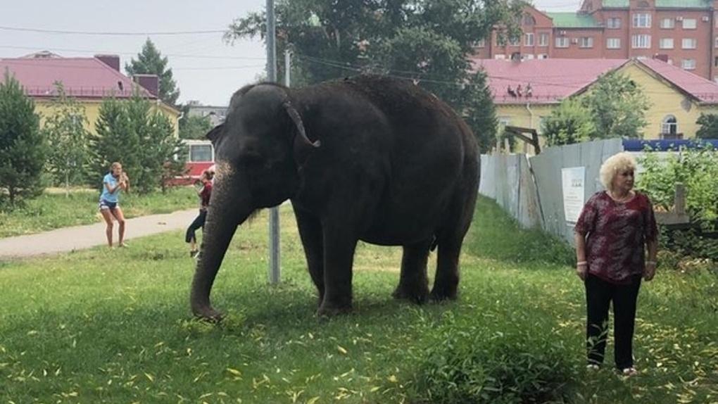 По Омску разгуливал слон