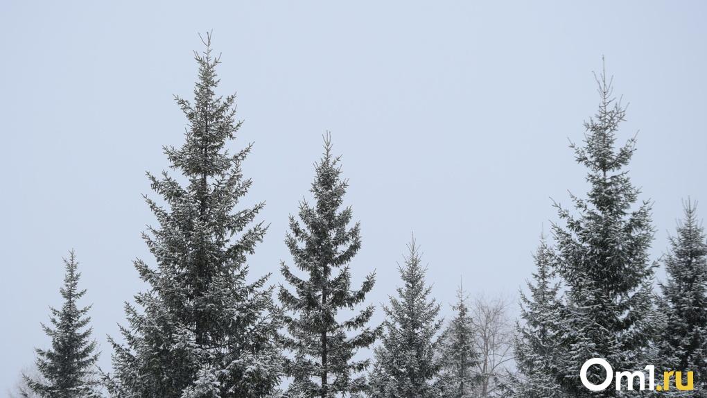 Синоптики рассказали, какой будет погода в новогоднюю ночь в Омске