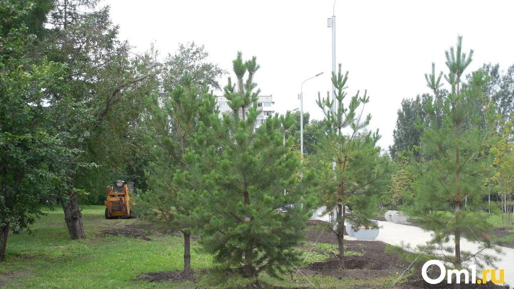 Новосибирская безымянная площадь получила название