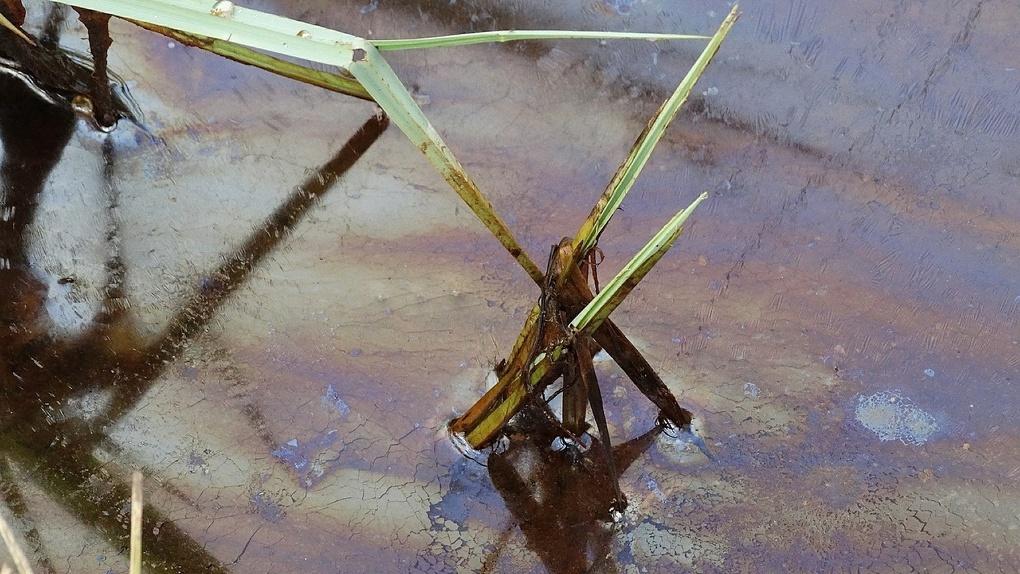 В Омске ликвидируют озеро, где хранилось около ста тонн мазута
