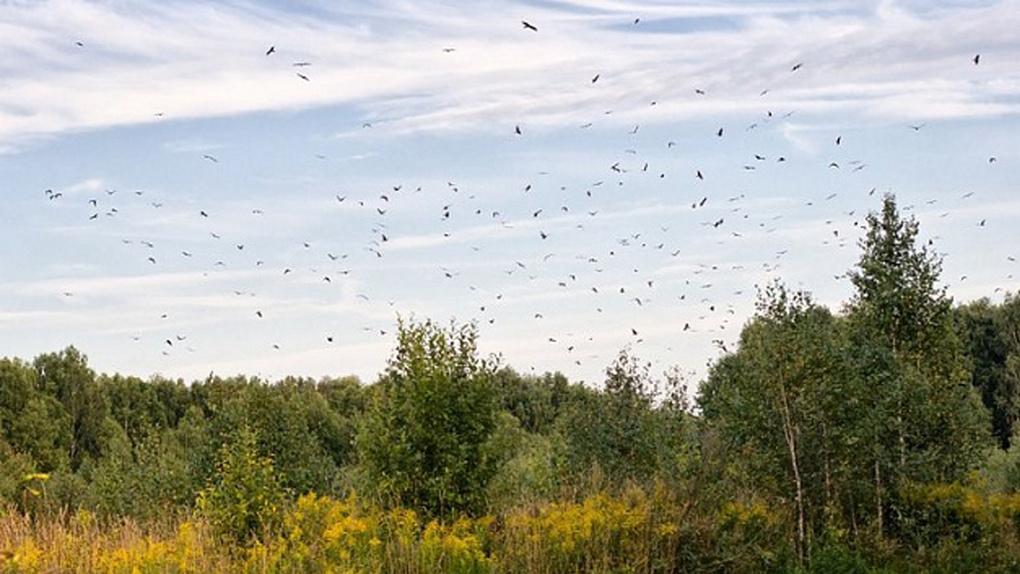 Свалку с птичьим помётом и потрохами нашли дачники под Новосибирском