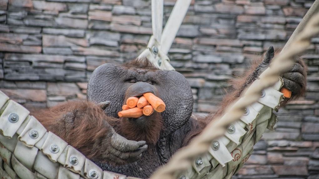 Мэрия Новосибирска передаст нелегальные фрукты и овощи в зоопарк