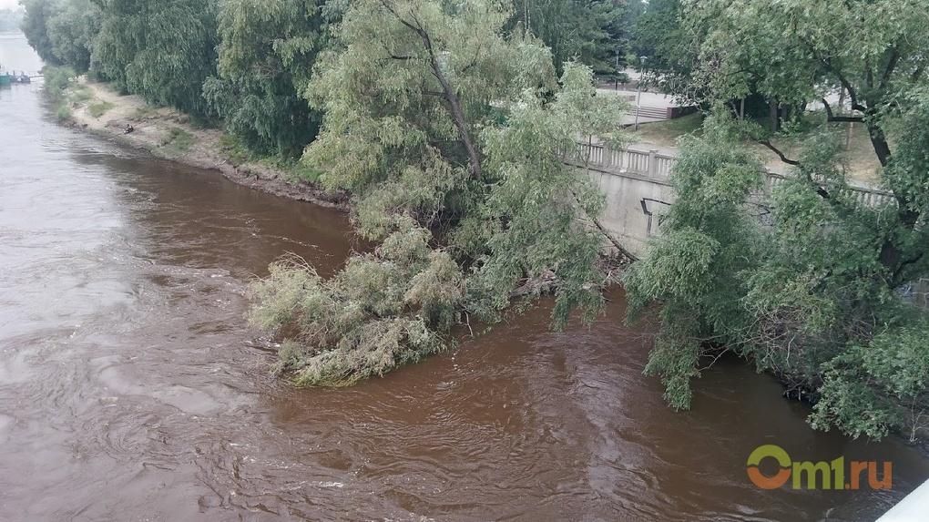 В центре Омска в реку рухнуло дерево