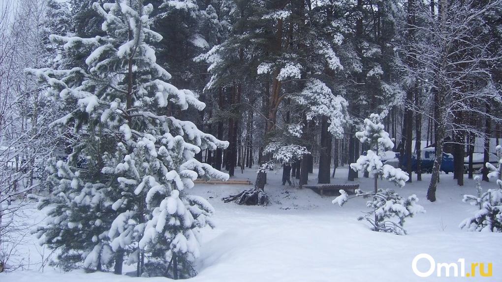 Резкое похолодание и снегопады: какой будет погода в Новосибирске на предстоящей неделе