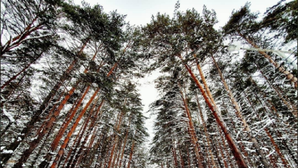 Спикер новосибирского Заксобрания назвал месяц возможного принятия Генплана Новосибирска