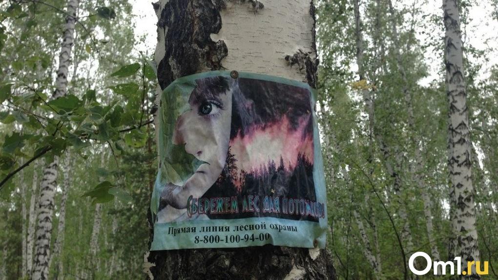 В Омской области горит лес на площади больше ста гектаров – на помощь вызвали авиацию