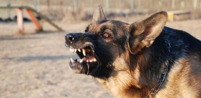 Хозяйка собаки, покусавшей омичку, выплатит 17 тысяч компенсации