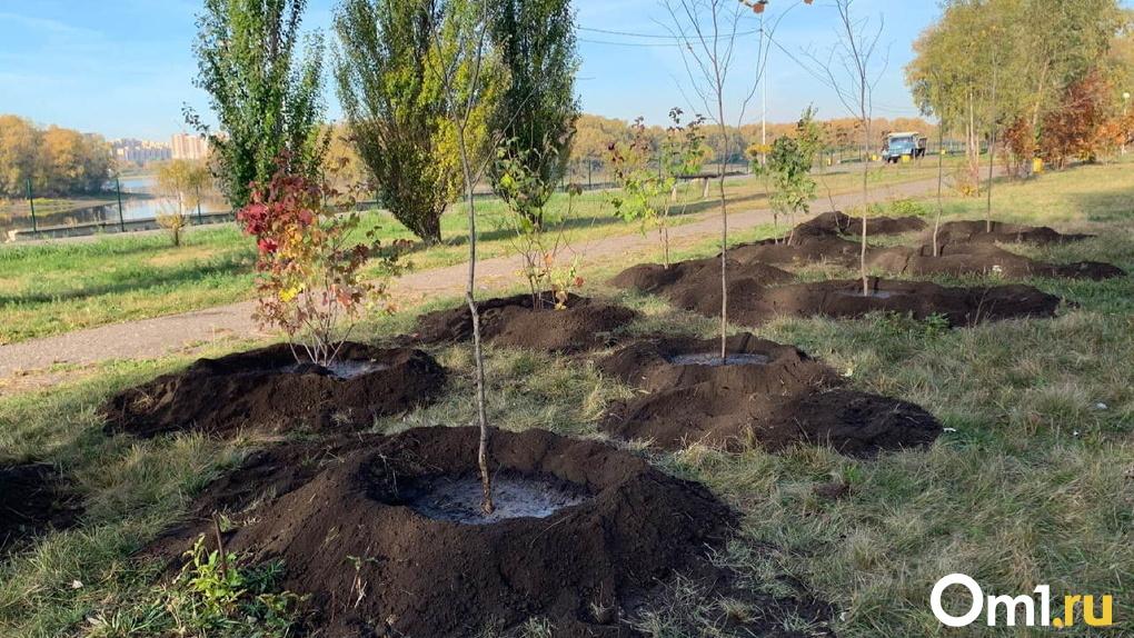 В Омске будут сажать деревья, но в масках