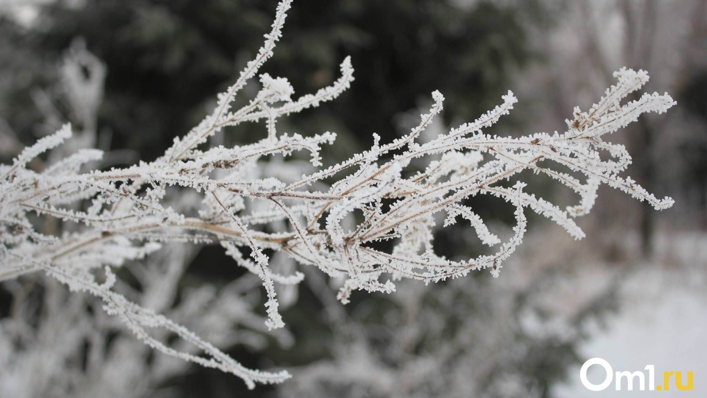 Резкое похолодание и снегопад: какая погода ждёт новосибирцев в День народного единства?