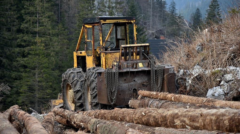 Около полусотни опасных деревьев вырубят в новосибирском сквере