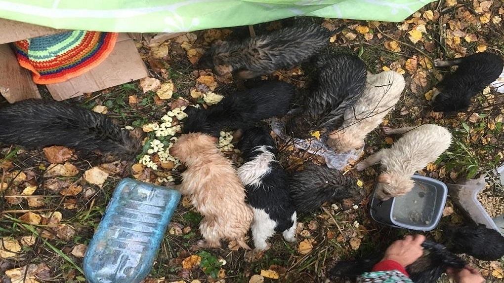 11 трёхнедельных щенков выбросили в лес в Новосибирске