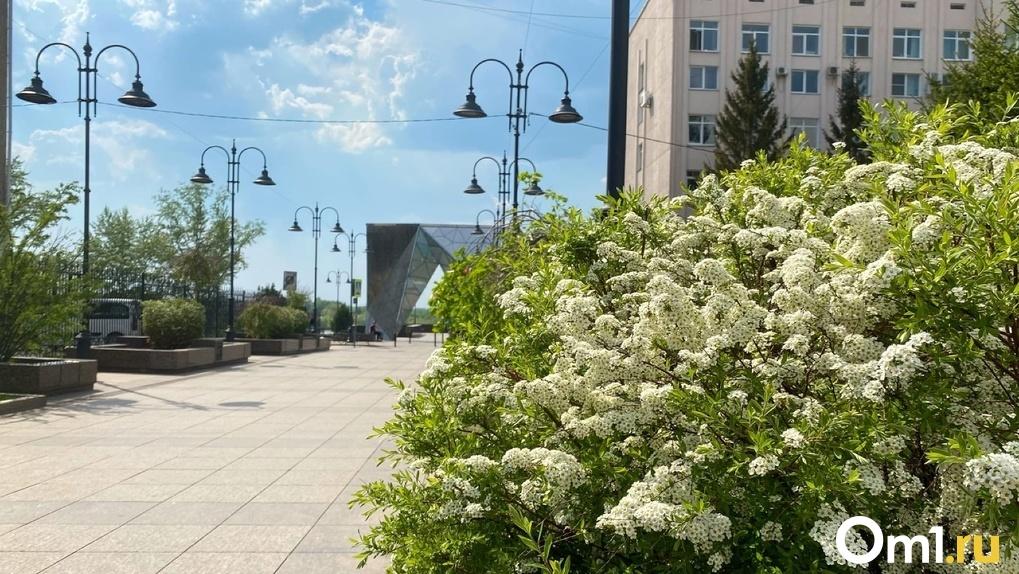 Аномальная погода в Омске: ожидается дикая жара до +34 градусов