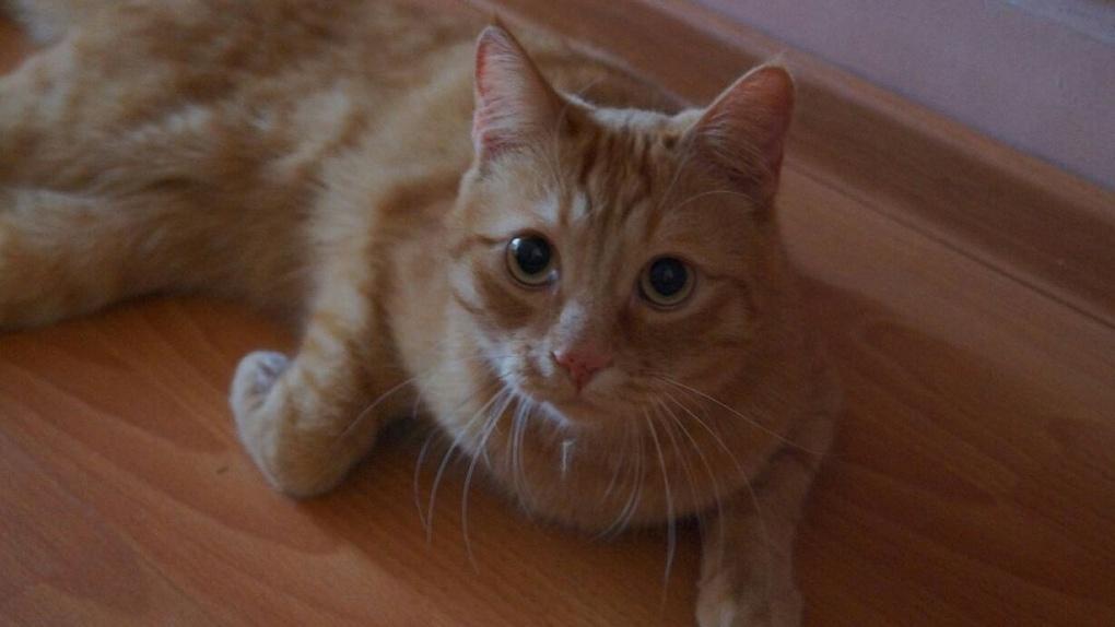 Новосибирская живодерка ответит перед судом за зверское убийство кота Моти