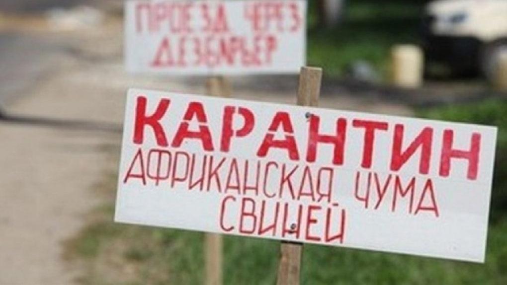 Россельхознадзор обвинил омских ветеринаров в сокрытии свиной чумы