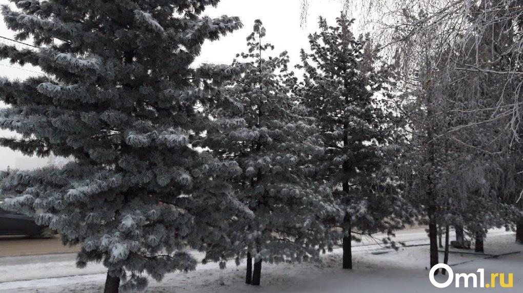 Сколько стоят ёлки в Омске и где выгоднее всего их покупать? КАРТА