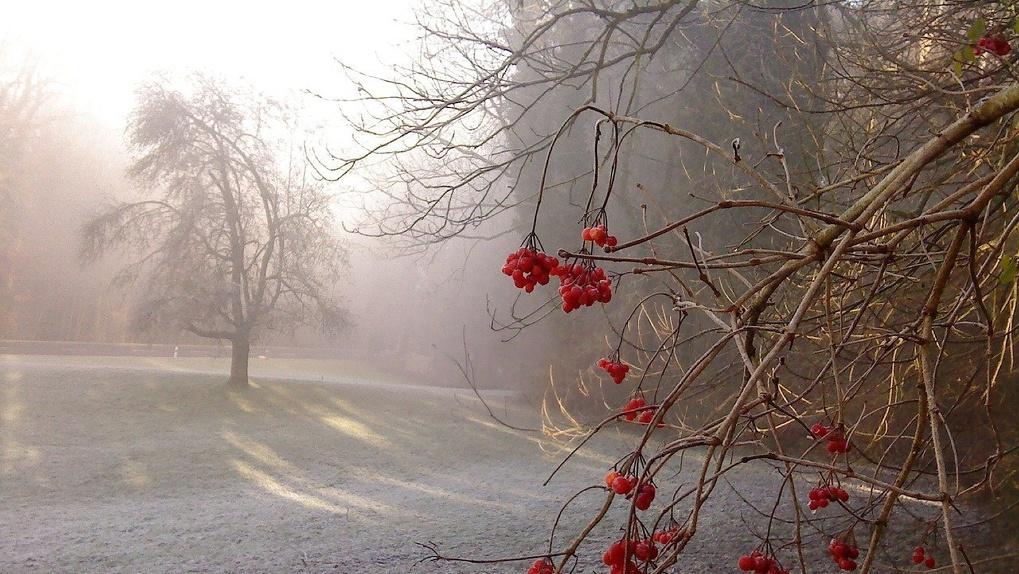 В Новосибирске ожидается резкое похолодание до -2 градусов