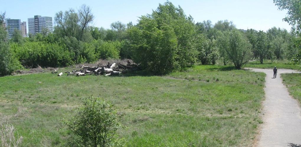В Омске состоится пикет против вырубки деревьев на «Зеленом острове»