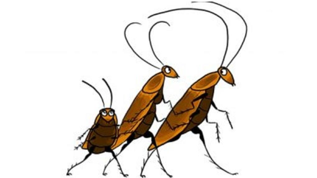 Тараканы в авто и тараканы на костылях: омичка пожаловалась на плохие условия в больнице