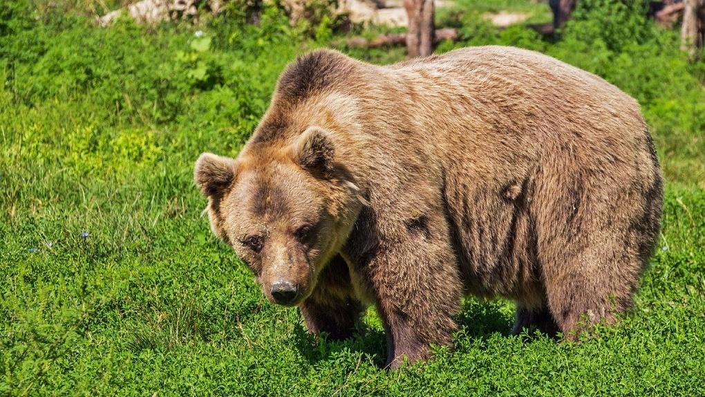 Новосибирский зоопарк получит почти 22 миллиона рублей из областного бюджета