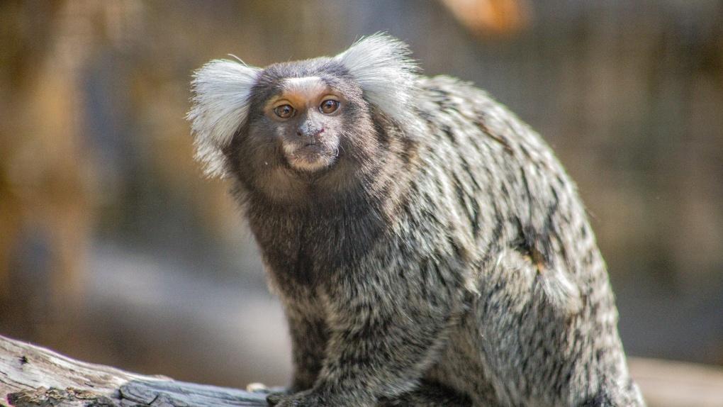 Животные Новосибирского зоопарка переезжают в зимние павильоны