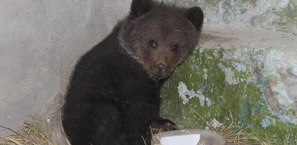 Житель Омской области нашел у себя в огороде медвежонка