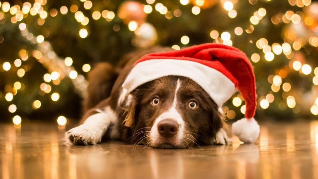 Омичей просят в новогоднюю ночь не выгуливать собак