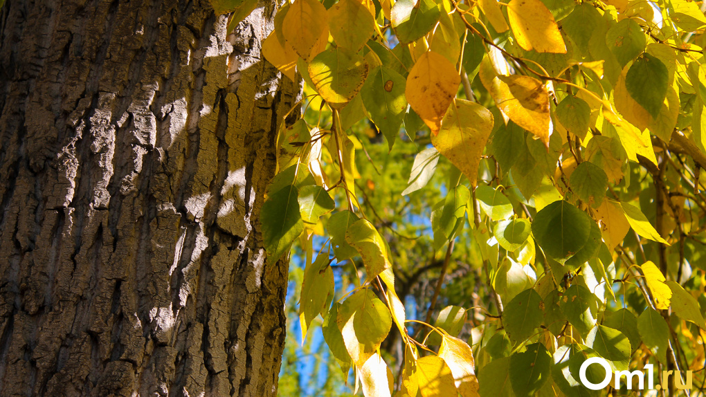 Почему листья становятся разноцветными? Самый осенний тест от Om1