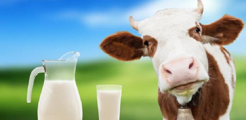 Омичи могут заразиться энцефалитом через молоко