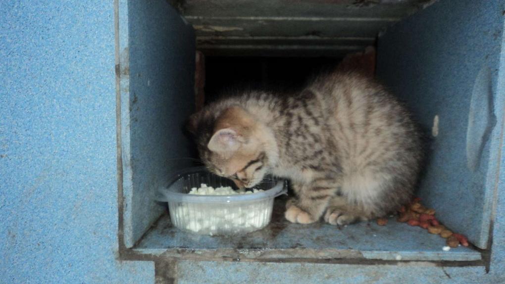 В Омске кошки умирают в замурованных подвалах
