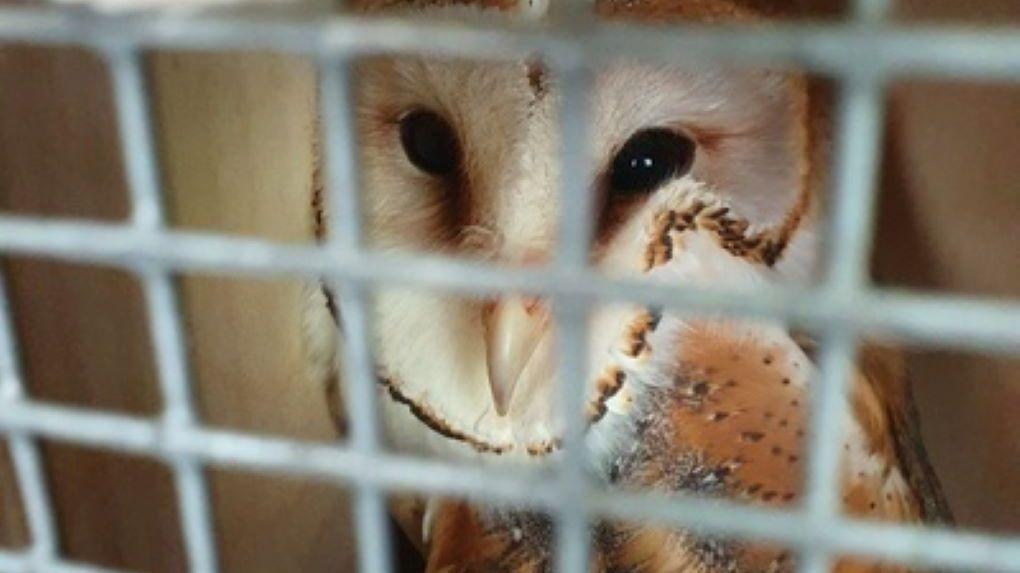 В Новосибирском зоопарке появятся пять сов и одна белка из Санкт-Петербурга