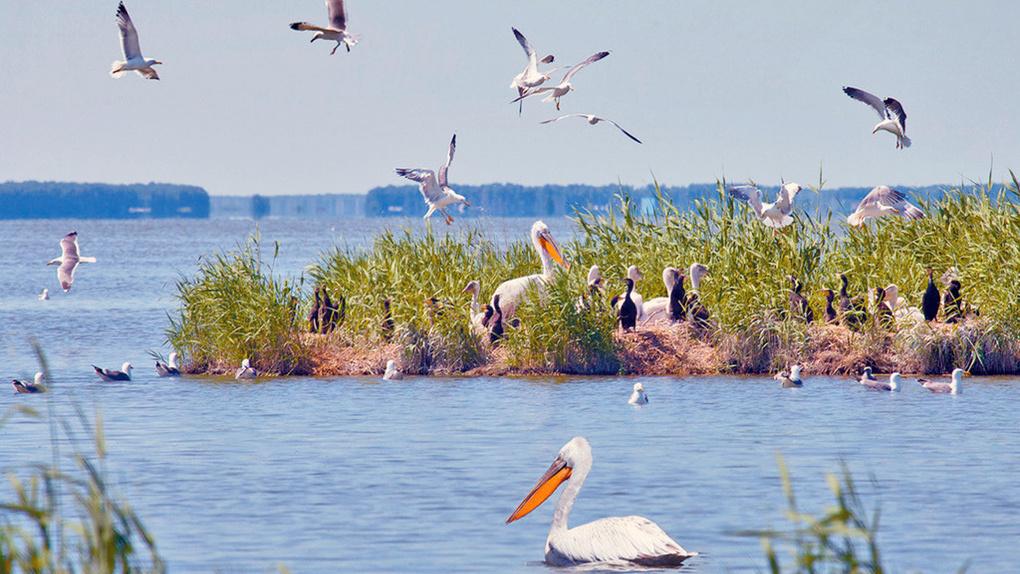 Летом омичи смогут отправиться на пеликаньи острова, к латышам и в казахские аулы