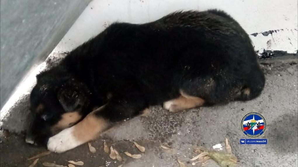 Новосибирские спасатели вызволили щенка из глубокой ямы