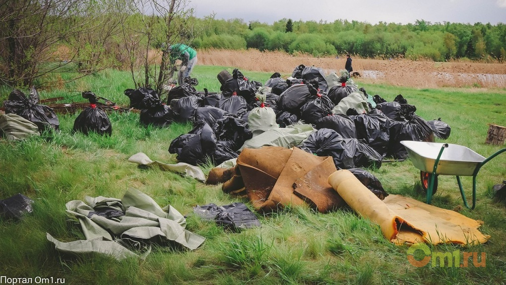 На омской свалке высадили 2 800 сосен
