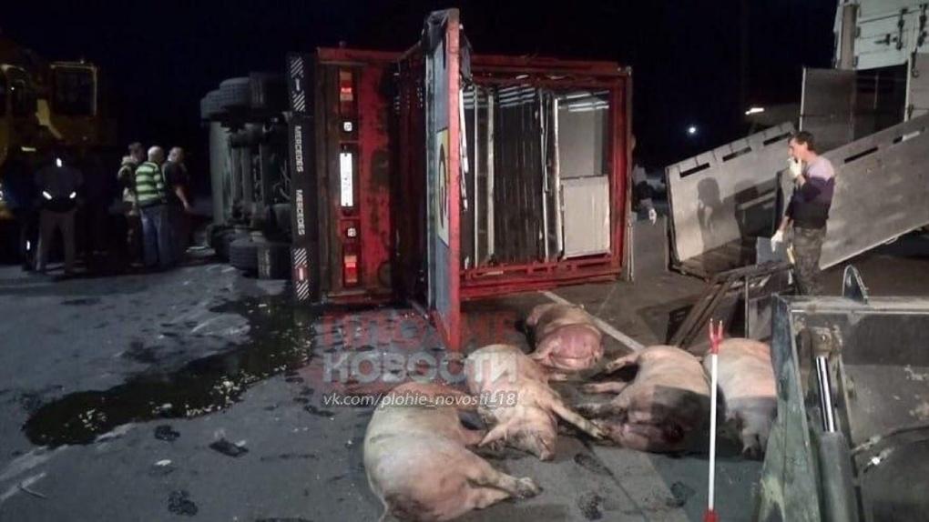 В Омской области дальнобойщик убил в ДТП 70 поросят