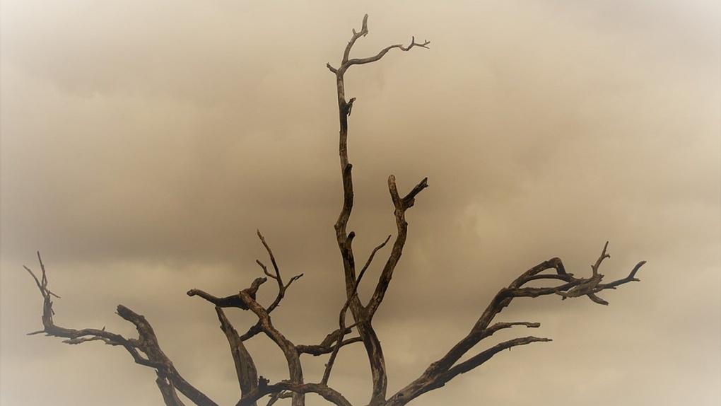 В омском воздухе обнаружили слишком много пыли