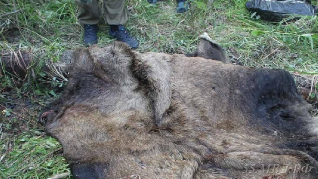 В Омской области поймали браконьера, убившего лося