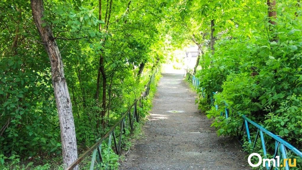 Ученые считают, что с каждым годом зеленых зон в Омске и Новосибирске будет все меньше