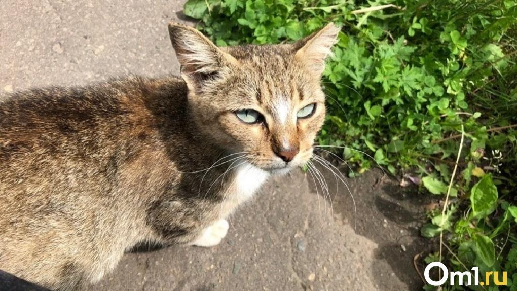 Обстреливают кошек и снимают с них скальп. В Омске завелись живодёры